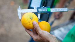 Orangeland: Ένας σύγχρονος κόσμος αφιερωμένος στο πορτοκάλι στοχεύει στην τοπική ανάπτυξη της