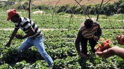 Κοντονής: Διερεύνηση των συνθηκών που οδήγησαν τα Δικαστήρια στην αθώωση των παραγωγών φράουλας της