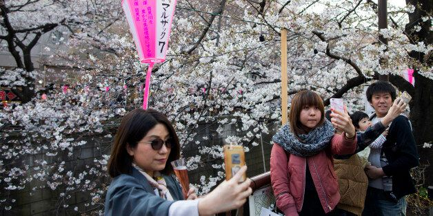 TOKYO, JAPAN - APRIL 04: People pose for selfie photographs in front of cherry trees in bloom on April...