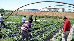 Καταδικαστική απόφαση για την καταναγκαστική εργασία στις φυτείες φράουλας στη
