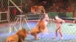Λιοντάρια επιτέθηκαν σε εκπαιδευτή τσίρκου στην