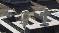 Άρτα: Σκυλίτσα περιμένει στον τάφο του αφεντικού της επί δύο
