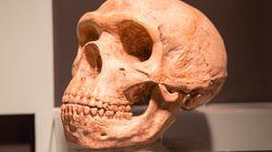 Η μασέλα του Νεάντερταλ «μίλησε» (με ελληνική συμβολή): Χρησιμοποιούσε πενικιλίνη και