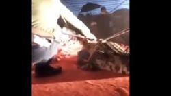 Βίντεο: Κροκόδειλος σε τσίρκο αρπάζει τον εκπαιδευτή του από το