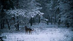 Μια σύγχρονη κοκκινοσκουφίτσα: Η περιπέτεια μιας τετράχρονης σε δάσος της Σιβηρίας για να σώσει την γιαγιά
