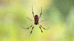Αχόρταγες οι αράχνες: Καταναλώνουν έως και 800 εκατομμύρια τόνους εντόμων κάθε
