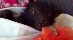 Νομίζετε ότι οι νυχτερίδες είναι «ανατριχιαστικές»; Αυτό το βίντεο θα σας κάνει να
