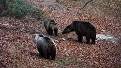Ήρθε η Άνοιξη και ξύπνησαν οι αρκούδες στο
