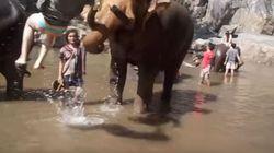 Η τρομάρα της ζωής της: Πώς αντέδρασε (ενοχλημένος) ελέφαντας σε κοπέλα που του έτριψε την