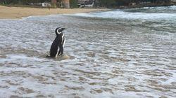 «Εισβολή» ενός εκατομμυρίου πιγκουΐνων σε περιοχή της