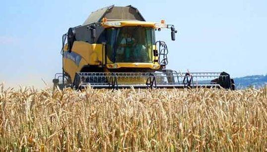 Céréales: recul de plus de 12% des importations durant les 7 premiers mois de