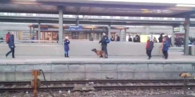 Σκύλος της αστυνομίας ρίχνει γυναίκα σε γραμμές