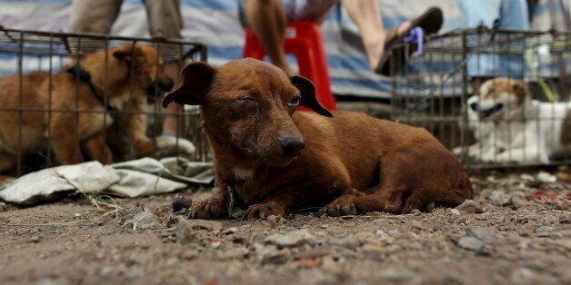 Dogs for sale are seen in Dashichang dog market ahead of a local dog meat festival in Yulin, Guangxi...