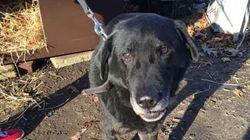 Η συγκινητική στιγμή που ένας σκύλος απελευθερώθηκε από τα δεσμά του μετά από 15