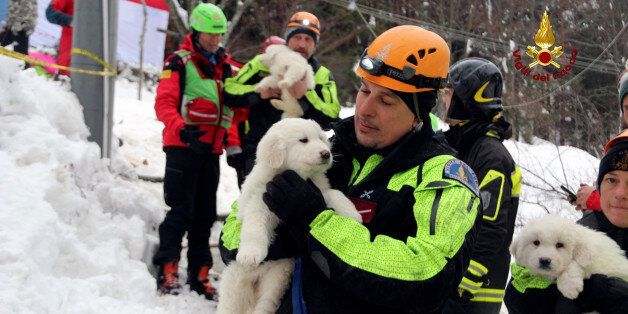 A firefighter holds one of the three puppies found alive in the rubble of the Hotel Rigopiano after the...