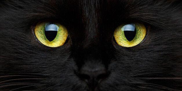 Cute muzzle of a black cat close