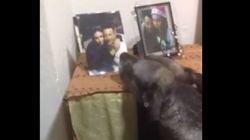 Σπαρακτικό βίντεο με σκύλο να θρηνεί καθημερινά μπροστά από τη φωτογραφία των νεκρών αφεντικών