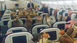 80 γεράκια ταξιδεύουν...με αεροπλάνο. H φωτογραφία έγινε viral αλλά κάποιοι δεν παραξενεύτηκαν και τόσο