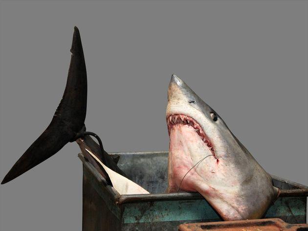 Βρετανία: Σκότωσαν σπάνιο μπλε καρχαρία και τον έφαγαν σε φεστιβάλ
