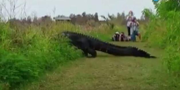 Γιγαντιαίος αλιγάτορας αφήνει άφωνους τους τουρίστες στην