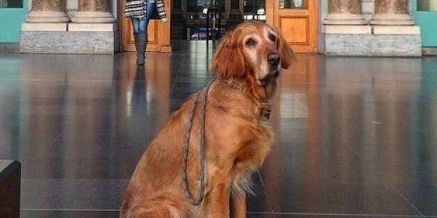 «Sad Dogs Outside Shops»: Ο λογαριασμός του Instagram που όλοι οι ζωόφιλοι πρέπει να