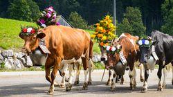 Οι κάτοικοι πόλης στην Ελβετία δεν δίνουν διαβατήριο σε μια... «ενοχλητική vegan» για τον πιο απίστευτο