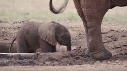 Μωρό ελεφαντάκι εγκλωβίστηκε σε ποτίστρα. Η διάσωσή του κάνει τον γύρο του