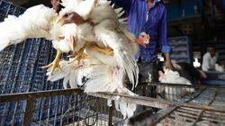 Δύο εστίες της γρίπης των πτηνών στην Τσεχία. Ανησυχία σε όλη την
