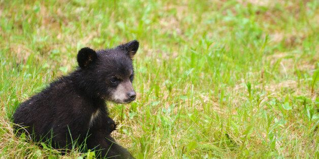 Λύθηκε το μυστήριο με τη νεκρή οικογένεια αρκούδων που εντοπίστηκε στις αρχές του Δεκεμβρίου στην