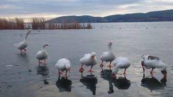 Πάγωσαν οι λίμνες Καστοριάς και