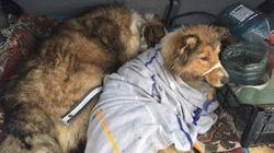 Σκύλος πέρασε δύο ημέρες σε παγωμένες σιδηροδρομικές γραμμές προσπαθώντας να σώσει το ταίρι