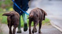 «Κατασκόπευαν» απλούς πολίτες στην Αγγλία για τα περιττώματα σκύλων και τα σκουπίδια στους