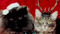 Αυτές οι γάτες είναι πολύ ενθουσιασμένες που έρχονται
