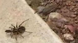 Πώς μία σφήκα μετέτρεψε σε σκλάβα της μία τεράστια