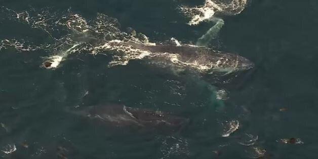 Και όμως, τα κόπρανα φάλαινας «φρεσκάρουν» τον