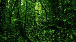 National Geographic: Εκπλήξεις από τον τρόπο ζωής απομονωμένης φυλής στη ζούγκλα της