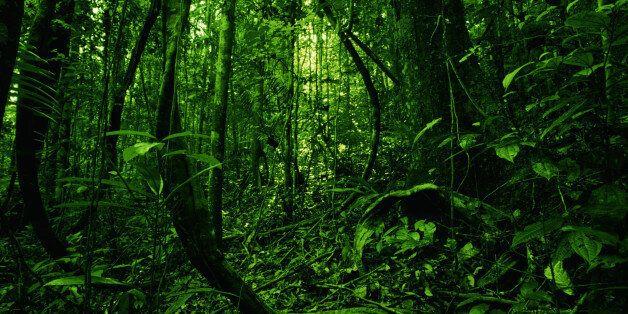 AMAZON FOREST,