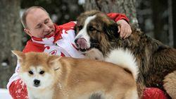 Ο Πούτιν αρνήθηκε σκύλο που του προσέφερε ως γαμπρό η Ιαπωνία (και άλλες ιστορίες με τα ζώα του