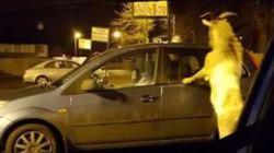 Μαινόμενη κατσίκα επιτέθηκε στους πελάτες ενός καταστήματος στη βόρεια
