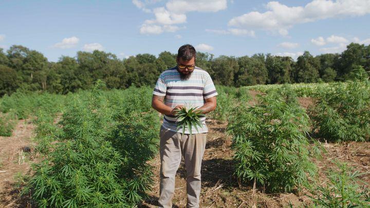 Luis Vega on his two acres of industrial hemp.