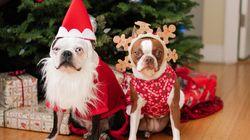 Τετράποδα Χριστούγεννα: Τρία γιορτινά μπαζάρ για