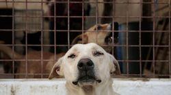 Πρόεδρος φιλοζωικής οργάνωσης κατηγορείται ότι εξόντωσε 2.000 σκύλους και