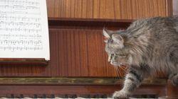 Όσοι έχουν γάτες παρουσιάζουν πιο συχνά ψυχολογικά