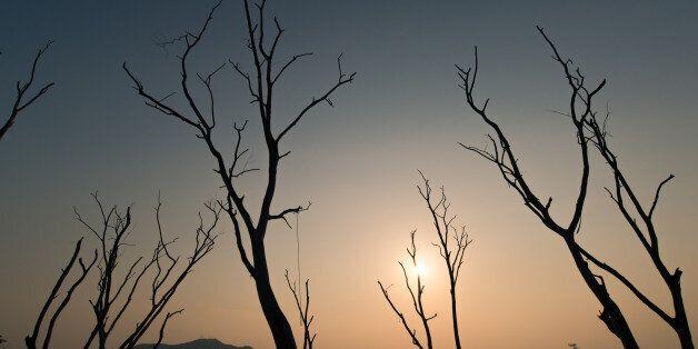 Dead tree at Bangphra water reservoir , Chonburi ,