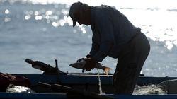 Παγκόσμια Ημέρα Αλιείας σήμερα: Μάθε πώς να επιλέγεις ψαρικά με οδηγό το Fish