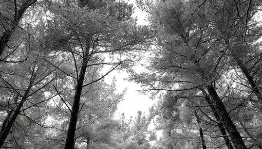 Τα πρώτα χιόνια στη Βόρεια Ελλάδα. Φωτογραφίες από τη