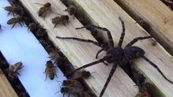 «Ένας για όλους, και όλοι για έναν!»: Αράχνη εναντίον σμήνους