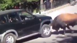 Mαινόμενος ταύρος επιτέθηκε σε αυτοκίνητο γεμάτο με
