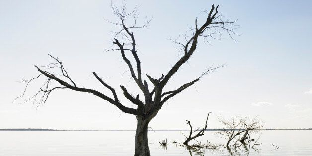 Dead Tree In Devil's