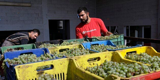 In this photo taken on Monday, Oct. 5, 2015, workers dumping crates of grapes into destemmer and crushing...